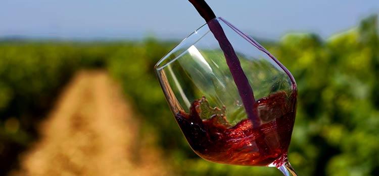 Статистика по экспорту вина